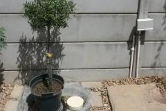 Greywater system -Stonehurst